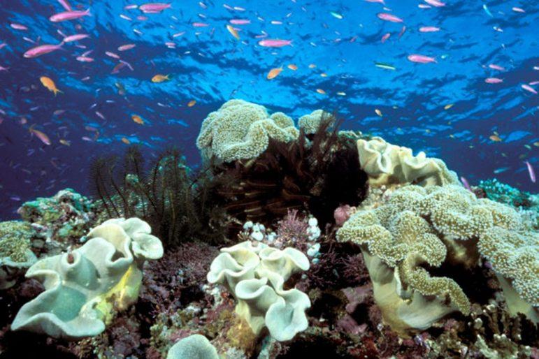Se protéger sans détruire nos fonds marins !