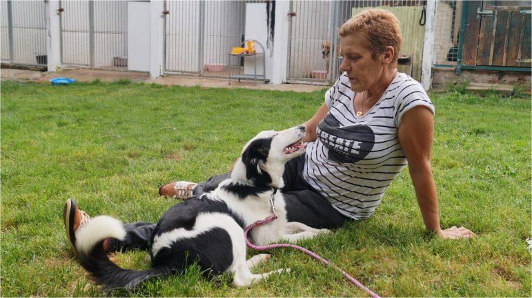 La mère aux bêtes , une association qui me tient à cœur…
